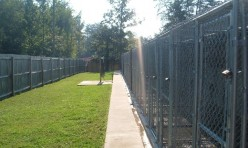 Large outdoor kennel run at Calypso Boarding Kennels