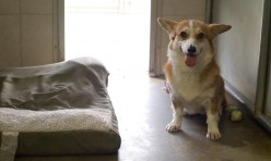 "Our Guest ""Sunny"" In Our Geriatric Dog Facility"